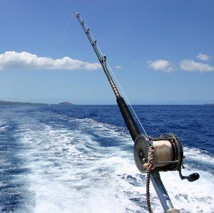 Deep sea fishing in abu dhabi emirates tours and safari for Ocean city deep sea fishing
